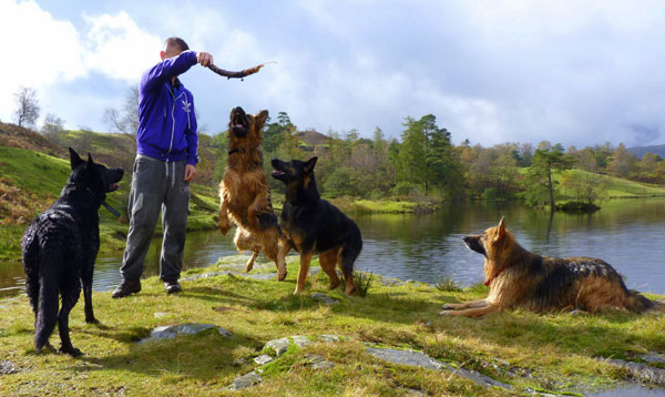 cumbrian german shepherd walk group