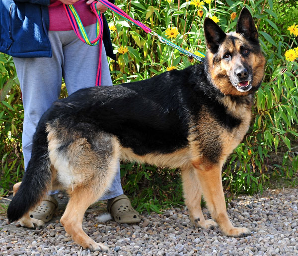 max older gsd