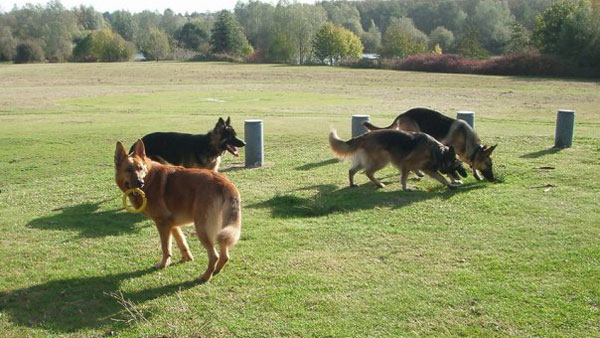 north devon german shepherd walk group
