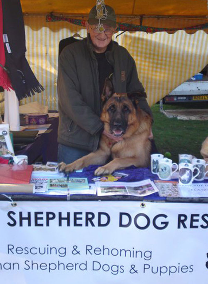 manning the stand with a german shepherd helping
